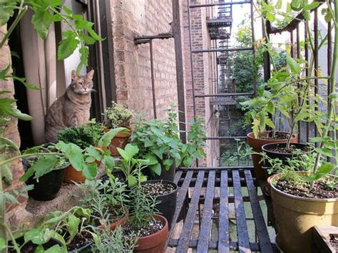 22 best ideas about Fire escape gardening on Pinterest