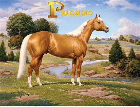 Golden Home Decor by Palomino Horse