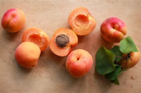 come fare la marmellata di albicocche in casa marmellata di albicocche ricetta ed ingredienti