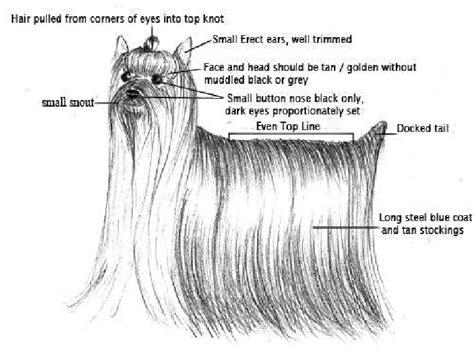 qml layout exle fishbone diagram in excel 2010 wiring diagram fuse box