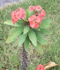 tanaman herbal puskesmas mojoagung