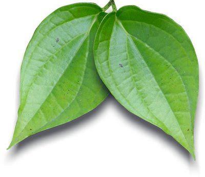 Obat Herbal Utk Batuk Kronis pengobatan herbal mengatasi bronkhitis ramuanherbalku