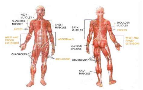 quadricep tattoo pain inner thigh leg muscles