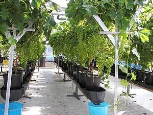 serre weight serre orti botanici e laboratori aperti 232 la giornata