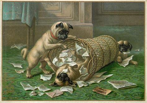 pug breeders sa three pug dogs with wicker garbage can and wastepaper tuckdb ephemera