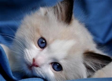 adopt  cat perth