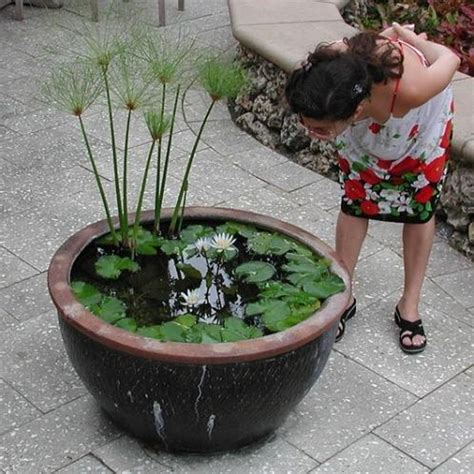 small water gardens in containers your own container water garden apartment therapy