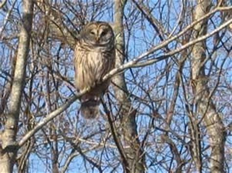 how to attract owls to your backyard how to attract owls so they will eat the critters that eat