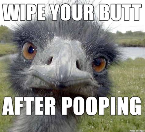 Ostrich Meme - ostrich meme pictures to pin on pinterest thepinsta