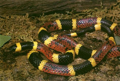Time To Be A Real Snake by There Was A Time When Houston Zoo Rubber Snake