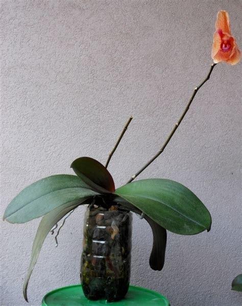 vasi per orchidee vasi per orchidee orchidee modelli di vasi per orchidee