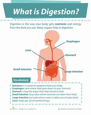what is biography in science what is digestion worksheet education com