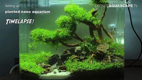 setting  planted nano aquarium timelapse youtube