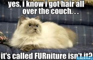 Clean Upholstery Couch 1000 Images About Cat Puns On Pinterest Grumpy Cat