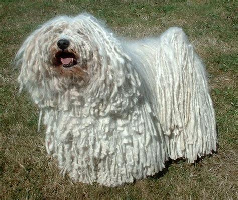 mop dogs xing fu mop