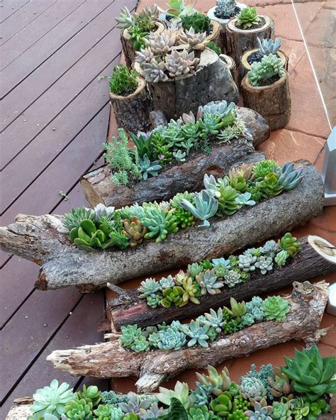 succulents garden ideas 70 indoor and outdoor succulent garden ideas shelterness