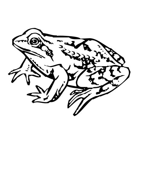 frog legs coloring page frog coloring arms and legs coloring pages