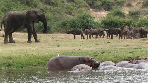 queen elizabeth national park uganda queen elizabeth national park uganda hosts tour operators in a bid to woo rwandan market