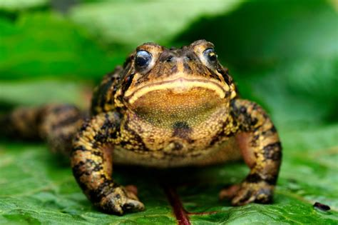 Garden Frogs by 9 Ways To Attract Frogs Toads To Your Garden