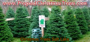 salt lake christmas tree lots trees salt lake free images at clker vector clip royalty free