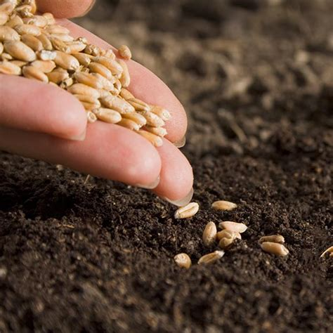 sowing seeds pictures to pin on pinterest pinsdaddy