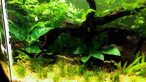aquascape co2 diy co2 aquascape youtube