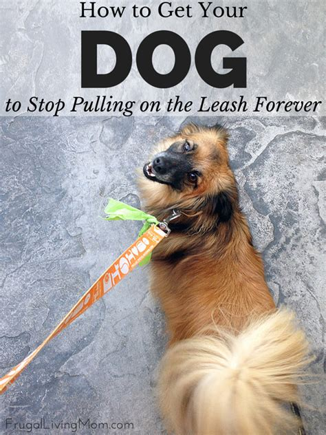 stop from pulling on leash how to get your to stop pulling on the leash forever