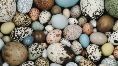 Animal Egg which animals lay eggs reference
