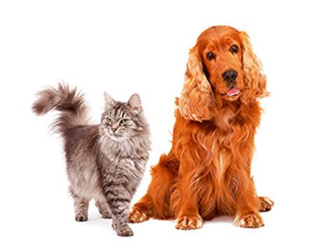 Imagenes Animales Con Pelo | animales con pelos imagui