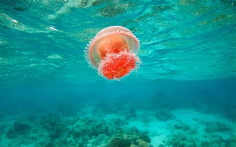 underwater themes for windows 10 17 best images about windows 10 themes on pinterest