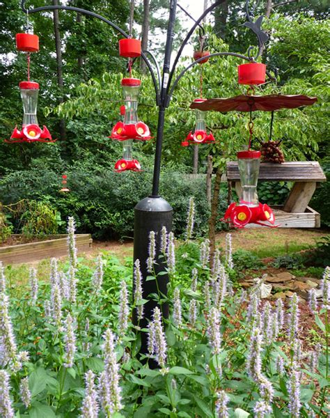 where should you hang a hummingbird feeder hummingbird