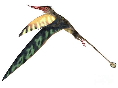 Home Decor Blogs In Tanzania rhamphorhynchus jurassic pterosaur painting by corey ford
