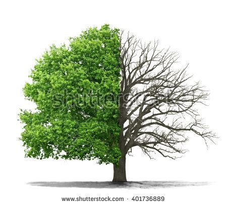 a living tree dead tree stock images royalty free images vectors