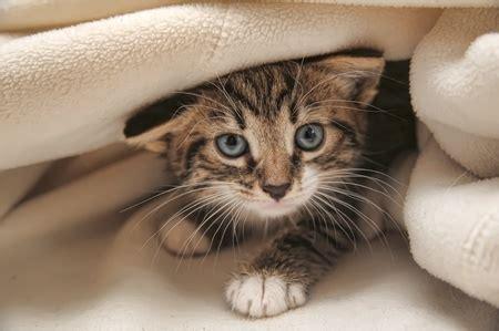 404378 un chat pour la vie adopter un chat c est pour la vie