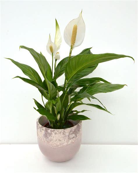 pflanzen november november gaertnerei menig floristik de