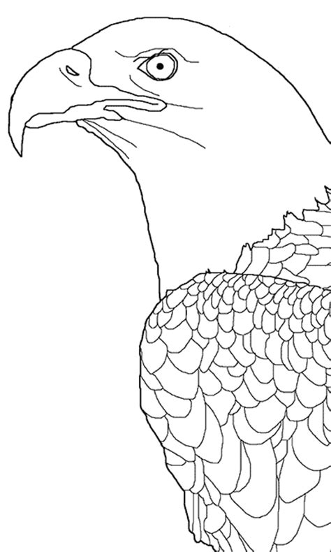 printable  bald eagle coloring picture  kids