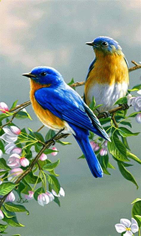free branch tree birds live wallpaper apk download for