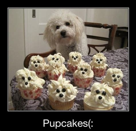 Puppy Birthday Meme - cute memes pupcakes for a dog birthday party holidays