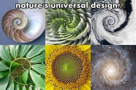 intelligent design nature journal the intelligent design found throughout nature