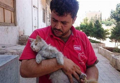 Makanan Kucing Kit Cat Up The Flutd Care 5kg pria ini memberi makan kucing kucing yg ditinggalkan krn perang suriah theproject