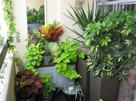 best patio plants the best outdoor plants for your balcony or patio