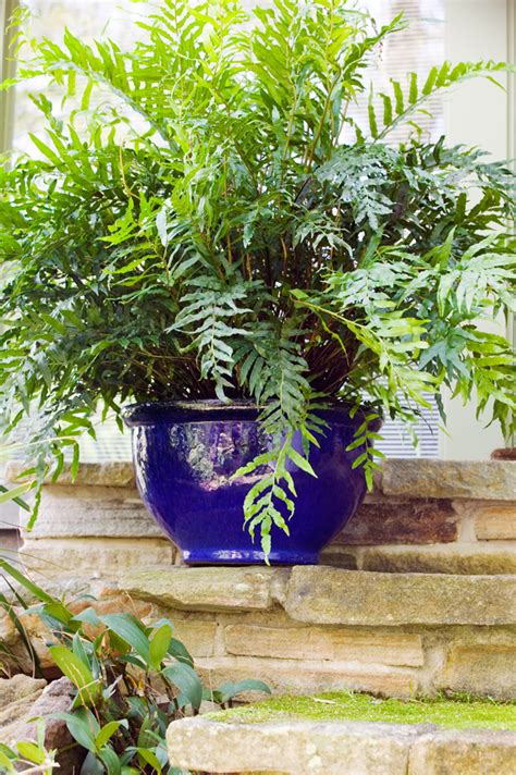 best plants for backyard best pot plants for sun and shade burke s backyard