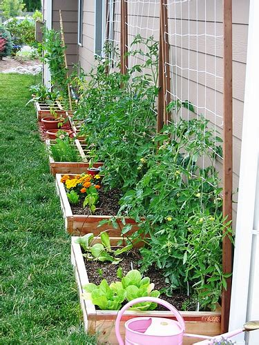 how to prepare a garden bed lou lou manfredini s advice about how to make a raised garden bed the garden lady