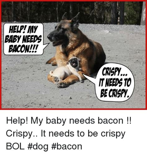 Dog Bacon Meme - dog bacon meme 28 images non smoking dogs page 3