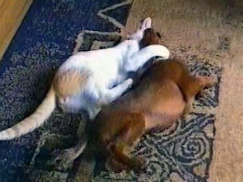 funny animal  funny animals compilation