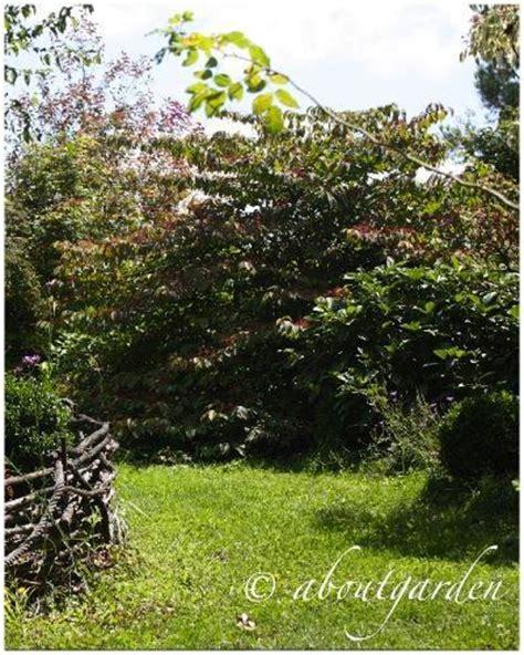 giardini francesi giardini francesi jardin de maurice laurent paperblog