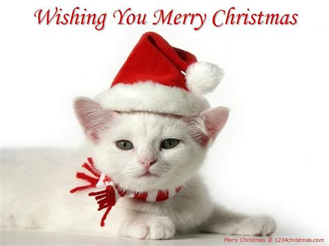 images of merry christmas kittens christmas cats wallpapers christmas kittens wallpapers