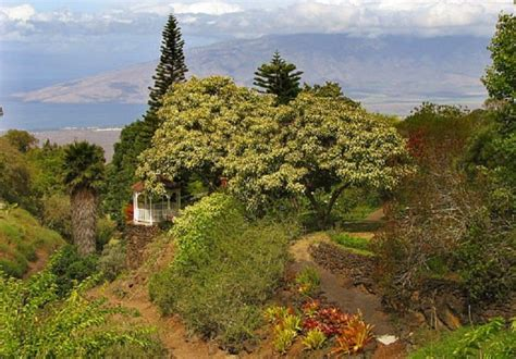 Kula Botanical Gardens 14 Things To Do In Hawaii When You Thought You Ve Done Everything