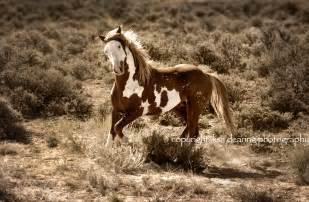 Topic mustang herd wild horse mountain