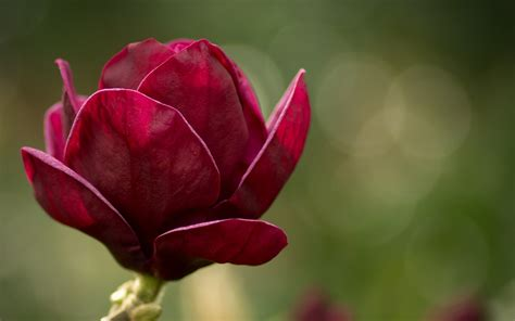 2560x1440 magnolia flowers bloom channel cover flower hd wallpaper and background 1920x1200 id